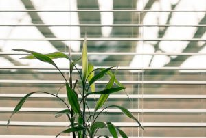 Durable Blinds